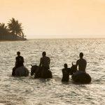 Zwemmen met paarden - Benguerra Lodge - &Beyond