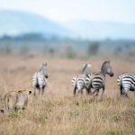 Safari - Grumeti Reserve - Singita