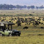 Safari - Mara Expedition Camp - Great Plains Conservation