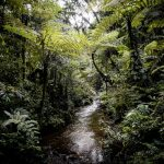 Safari - Sanctuary Gorilla Forest Camp - Sanctuary Retreats