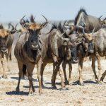 Leroo La Tau - Desert & Delta Safaris