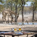 Ongava Tented Camp Namibie