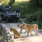 Jeepsafari - Lion Sands Ivory Lodge