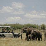 Jeepsafari olifanten - Saruni Wild