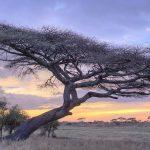 Landschap - Namiri Plains - Asilia Camps & Lodges