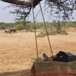 Olifanten bij water - Saruni Rhino