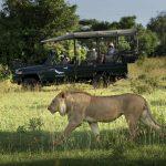 Safari - Jongomero Camp - AndBeyond