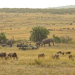 Safari - Kimondo Migration Camp - Asilia Camps & Lodges