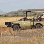 Safari - Kwihala Camp - Asilia Camps & Lodges