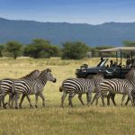 Safari - Lake Manyara Tree Lodge - AndBeyond