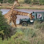 Safari - Samburu Intrepids