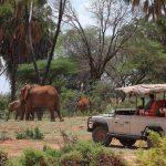 Safari - Samburu - Saruni