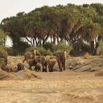 Safari - Saruni Rhino