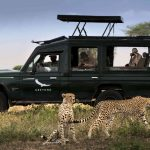 Safari - Serengeti Under Canvas - AndBeyond