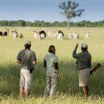 Safari - Somalisa Acacia Camps - African Bush Camps