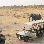 Safari - Somalisa Camp - African Bush Camps