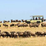 Safari - Ubuntu Migration Camp - Asilia Camps & Lodges