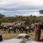 Safari Wildebeest Migratie - Mahali Mzuri - Virgin Limited Edition