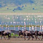 Safari flamengo's - The Highlands - Asilia Camps & Lodges