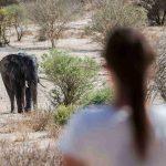 Safari olifant - Tuskers Bush Camp