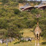 Safari voor Lodge - Mahali Mzuri - Virgin Limited Edition