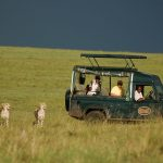 Safari widlife - Mara Intrepids