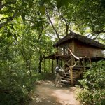 Treehouse - Lake Manyara Tree Lodge - AndBeyond