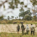 Walking safari - Kwihala Camp - Asilia Camps & Lodges
