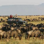 Wildebeest Migratie - Rekero Camp - Asilia Camps & Lodges