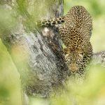 Wildlife - Boulders Lodge - Singita