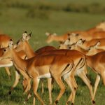 Wildlife - Mara Intrepids