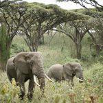 Wildlife-Sanctuary-Ngorongoro-Crater-Camp