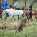 Wildlife tijdens paardrijden - Offbeat Mara Camp